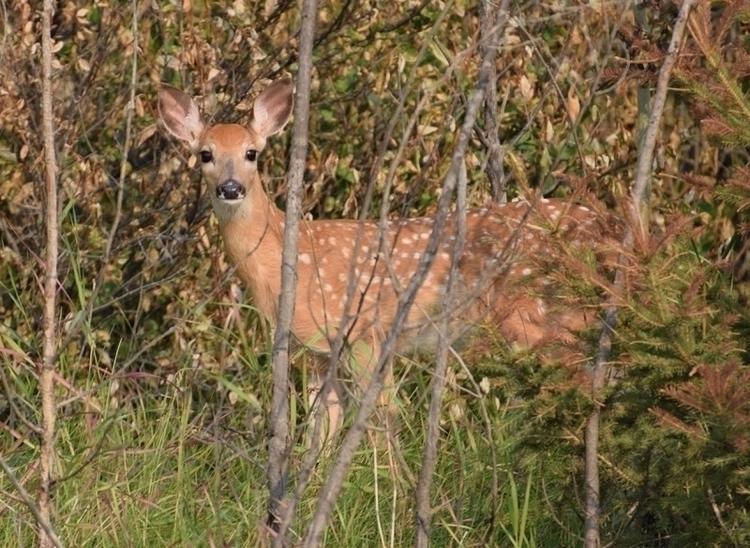 curious drive country deer wild - camwmclean | ello