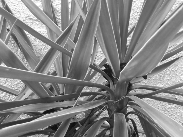 Mini Palm Tree Sidewalk Apps - mikefl99 - mikefl99   ello