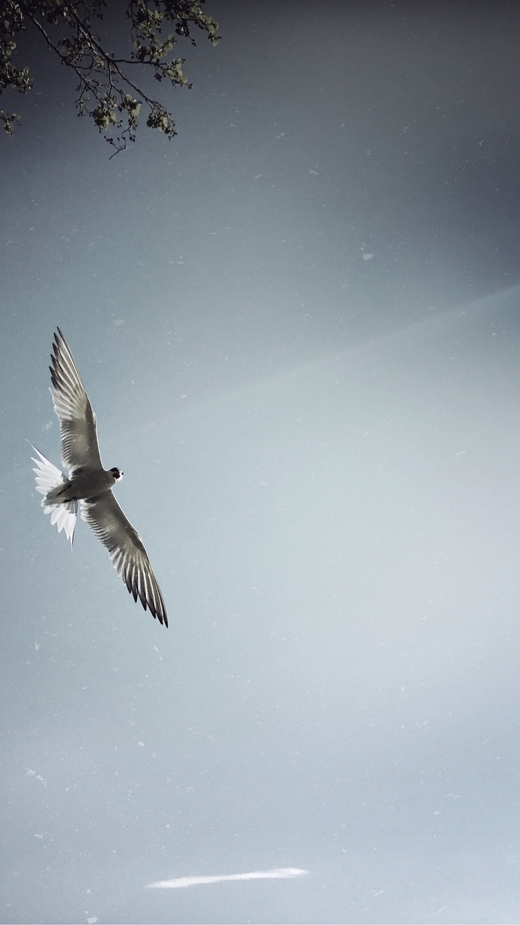 Fly High - life, nature, sky, seagull - yogiwod | ello