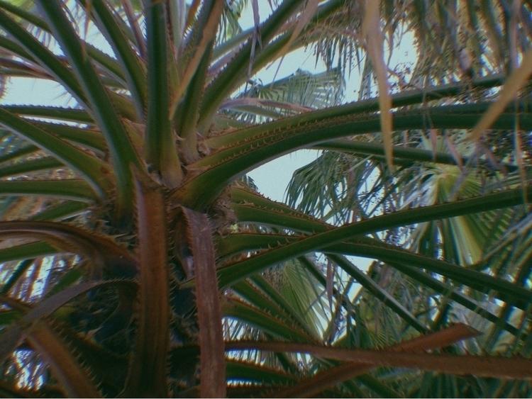 Deep Palm Tree Apps - mikefl99, ello - mikefl99 | ello