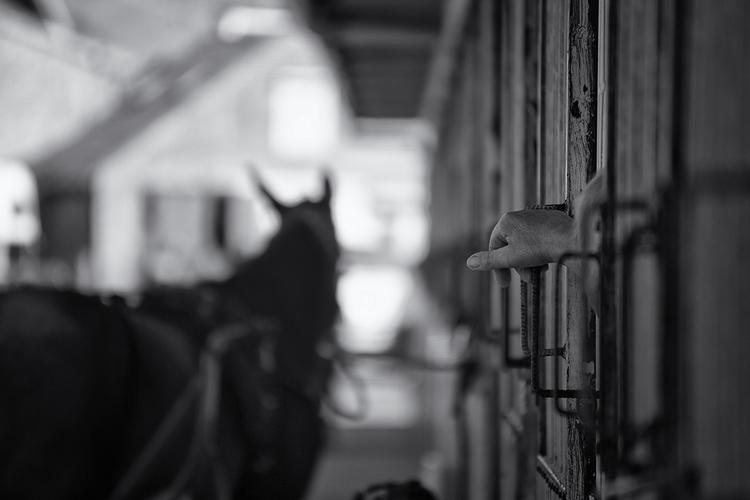 Hippodrome. smell horses. Dream - mauriliers | ello