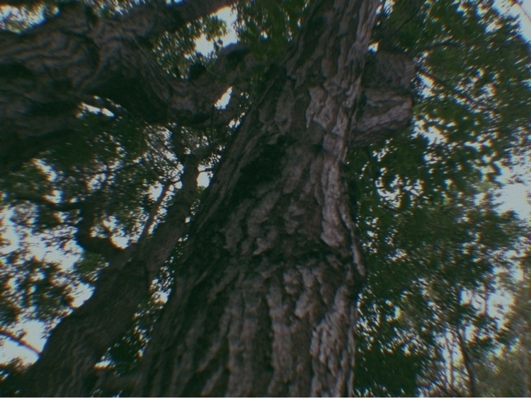 Trees Parking Spot Apps - mikefl99 - mikefl99   ello