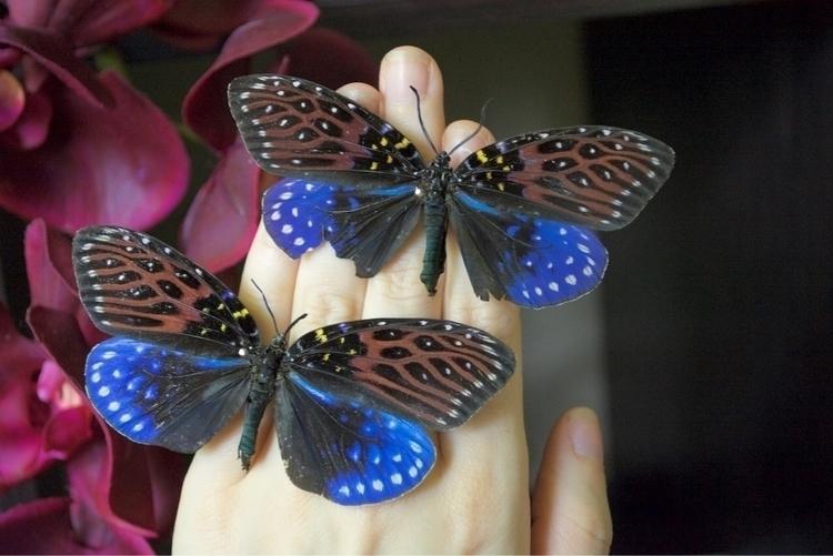Zygaenidae family day-flying mo - thebutterflybabe | ello