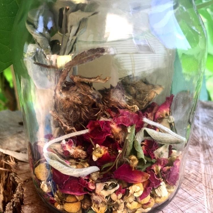 Mummified Mouse Apothecary Jar  - savageapothecary | ello