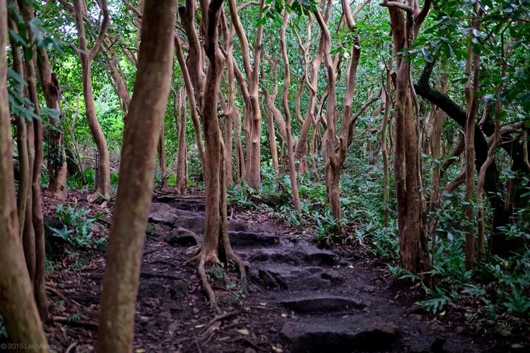 Pipwai Trail Maui. Shot Fuji - nofilter - everythingends | ello
