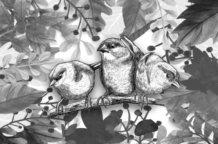 framebox, friendbox, birdforfriend - kasals | ello