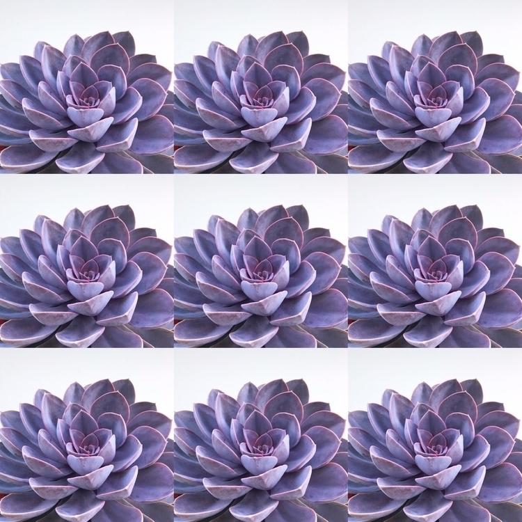 fav - poppinpurpleplants - soilamore | ello
