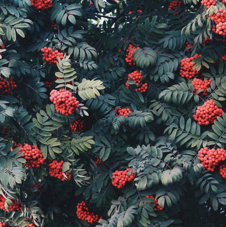 gay, plants, plant, flower, flowers - abaeterno | ello