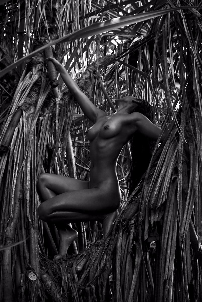 """Pandanus"" — Photographer:Step - darkbeautymag | ello"
