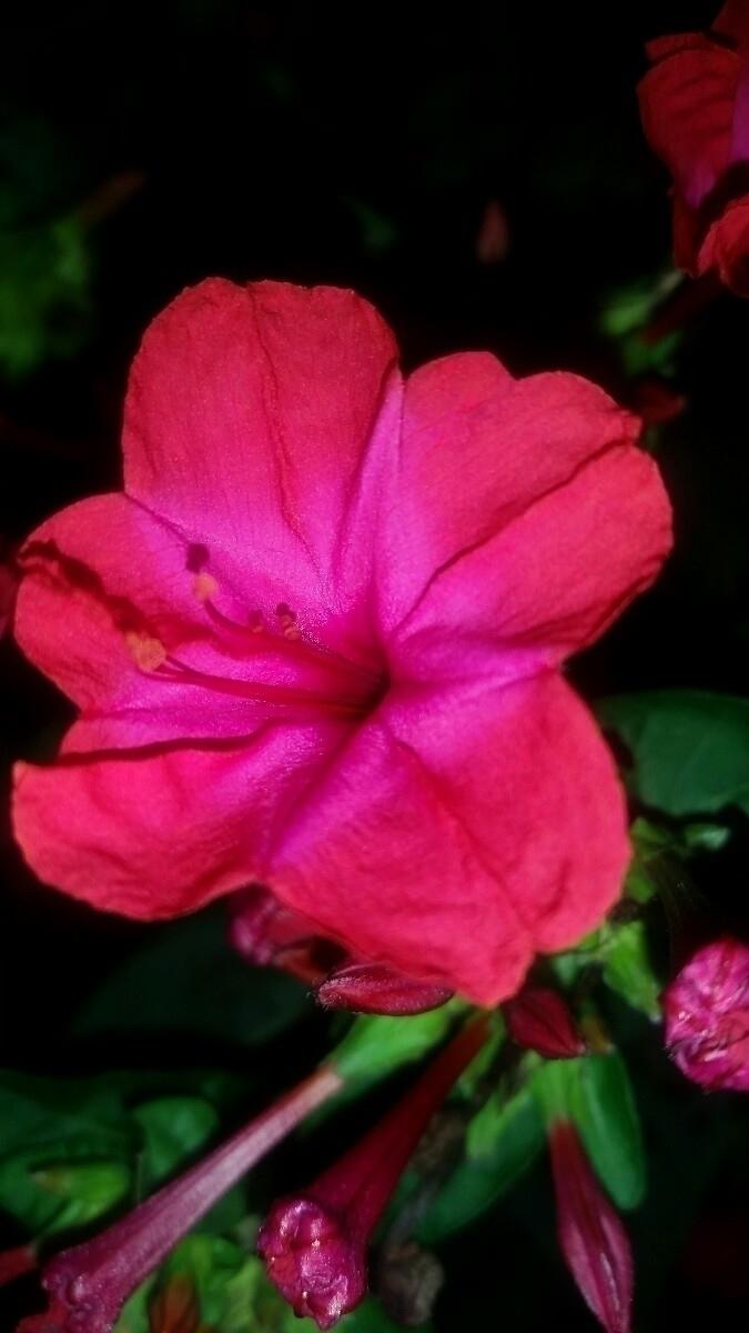 flowers, nature, photography - poetic1 | ello