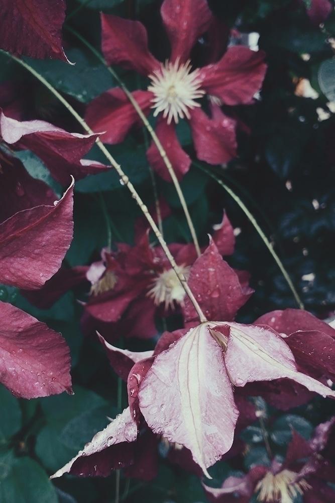 Deep purple Flickr / Tumblr Ins - andreigrigorev | ello
