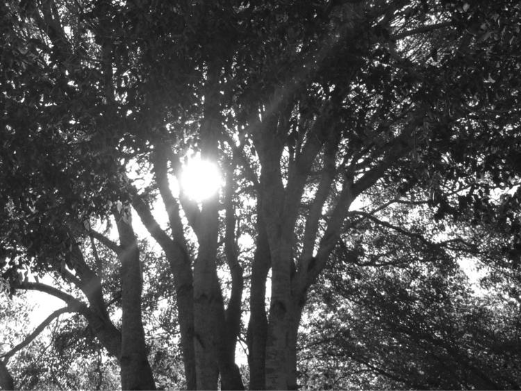 Morning Sun Rays Apps - mikefl99 - mikefl99 | ello