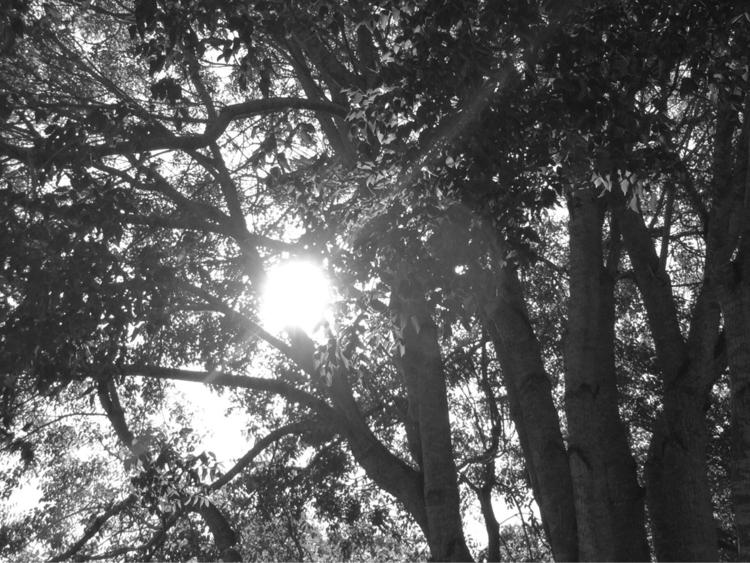 Rays Morning Sun Apps - mikefl99 - mikefl99 | ello