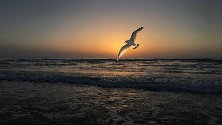 background, wallpaper, bird, sunset - kut-n-paste | ello
