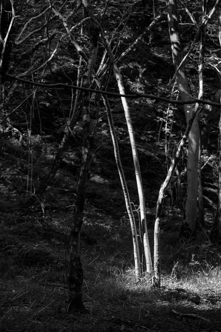 Spotlight - bradverts | ello