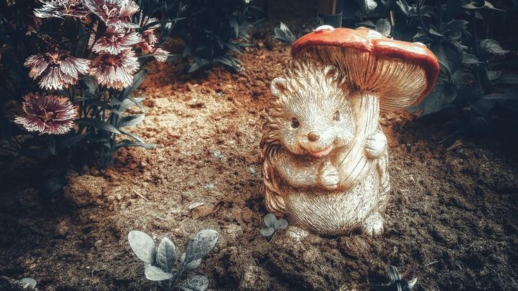 hedgehog, photography, photos - beheroght | ello