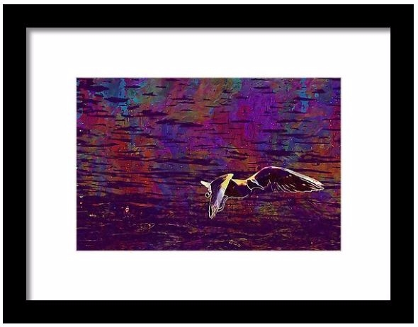 Bird Seabird Seagull Water Anim - pixbreak | ello