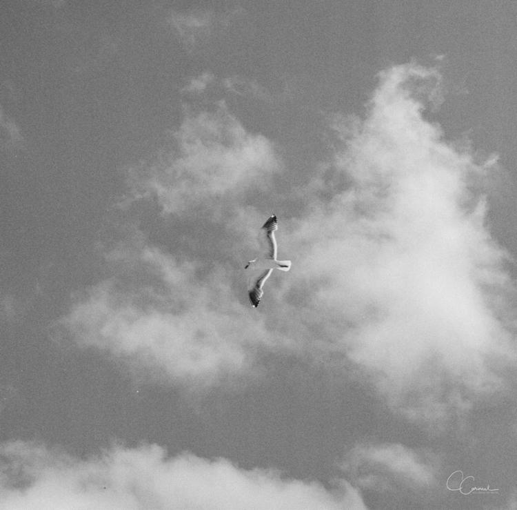 Freedom - filmisnotdead, filmphotography - coracoronel | ello