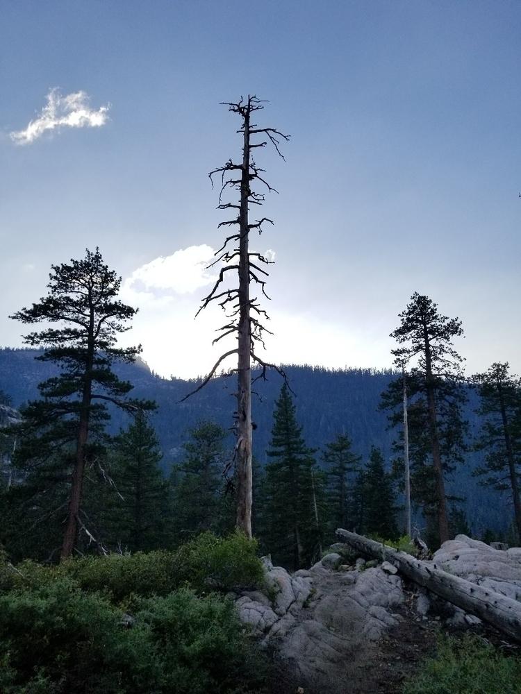 Tahoe trail - anarcho-vegan | ello