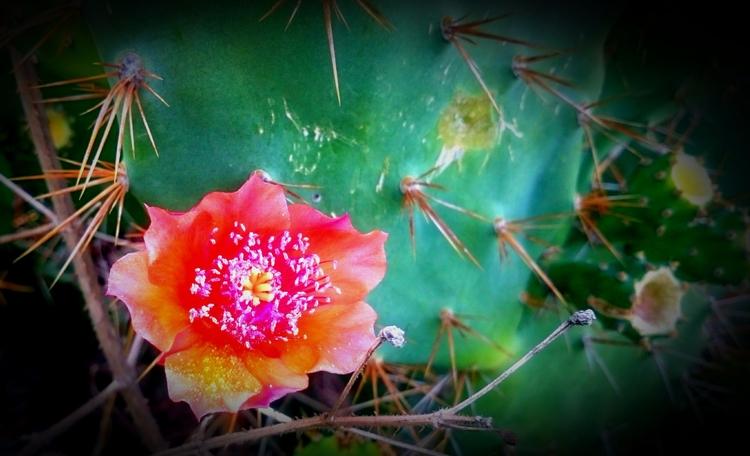 India, Cactus_:cherry_blossom: - atulbw | ello