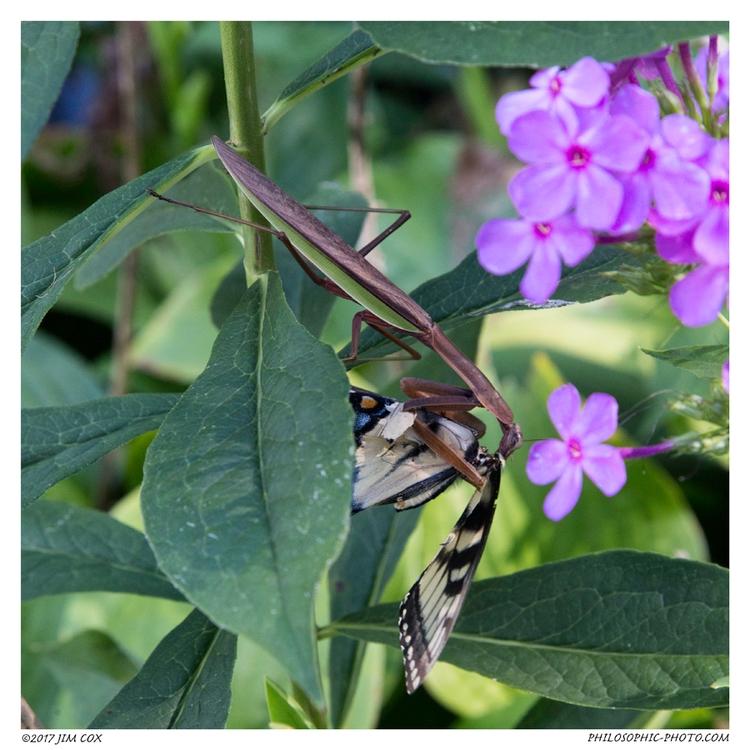 Embrace - mantis, prayingmantis - jascox   ello