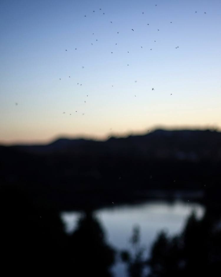 sound: Gnats - laartist, hike, nature - talyo   ello