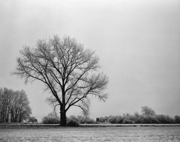 Baum im Winter Als ich dieses F - royfocke | ello