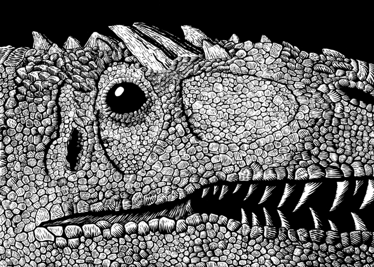 Allosaurus Fragilis Ink paper - illustration - splendidhand | ello