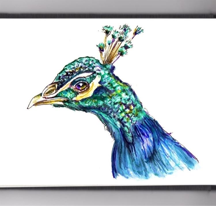 - Day 31 Proud Peacock - WorldWatercolorMonth - doodlewash | ello