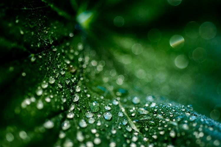 Final nature macro: Leaf Drople - davidhawkinsweeks | ello