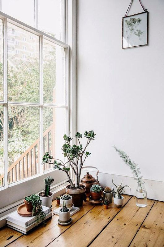 living simply plants - sfgirlbybay | ello