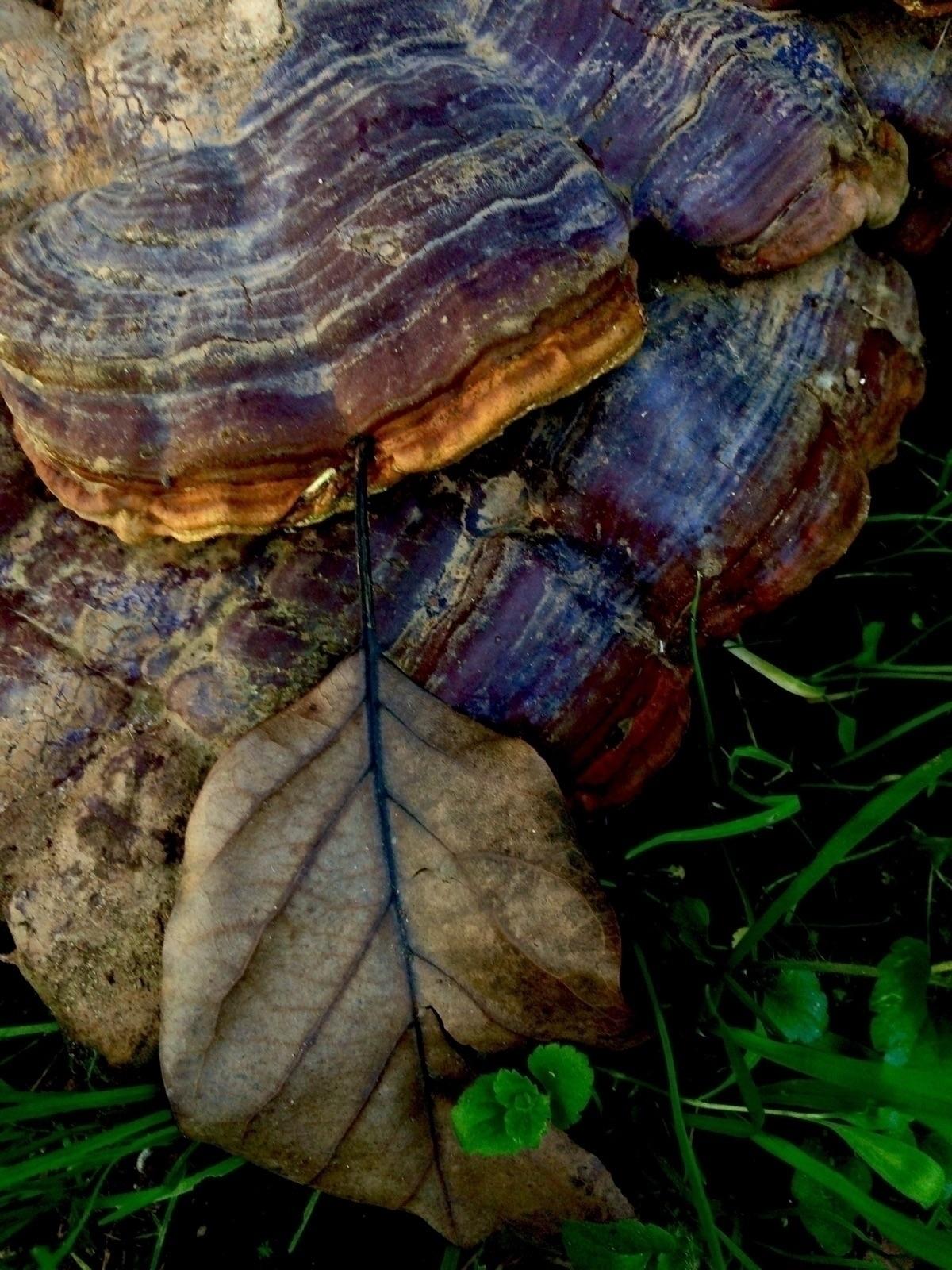 mushrooms, photography, nature - ivop | ello
