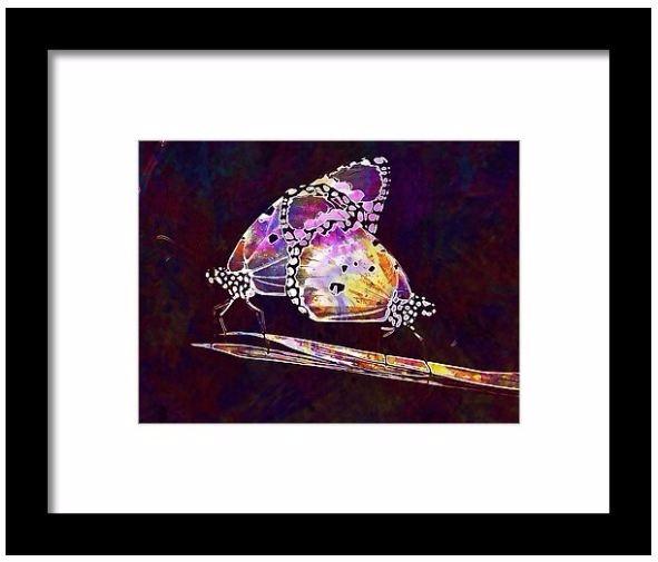 Wing Yellow Insect Flying Isola - pixbreak | ello