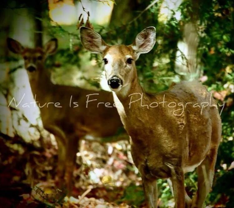 continued existence wildlife wi - natureisfree   ello