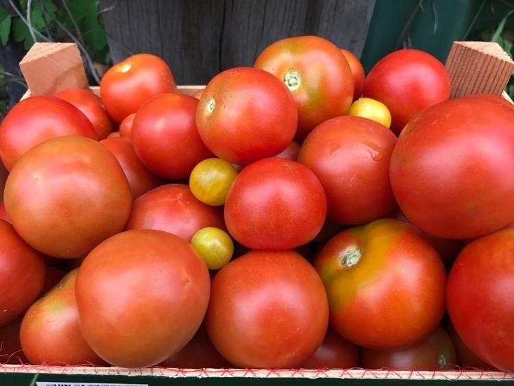 Tomatoes - iphonography, tomate - royfocke | ello