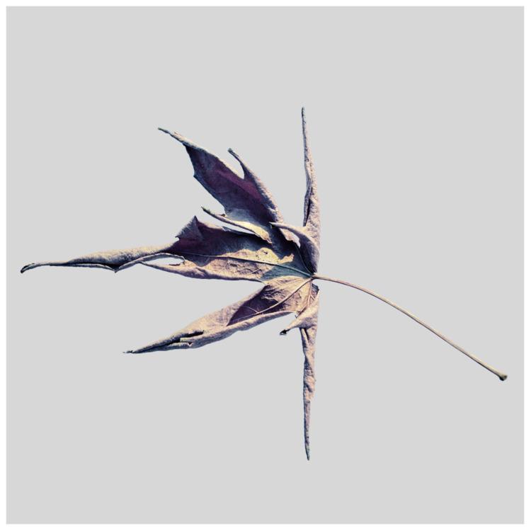 Surround leaf - photography, create - ralfralf | ello