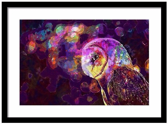 Barn Owl Predator Bird Prey Fra - pixbreak | ello