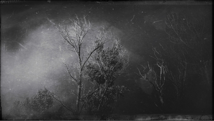 hear ghosts trees. Surrender - photography - simpleboxconstruction | ello
