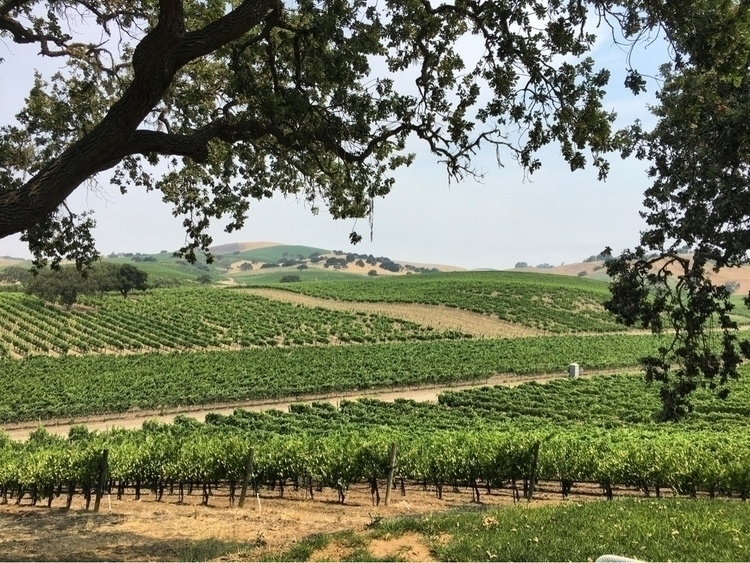 Stolpman vineyards, Ballard Can - nicomartinez | ello