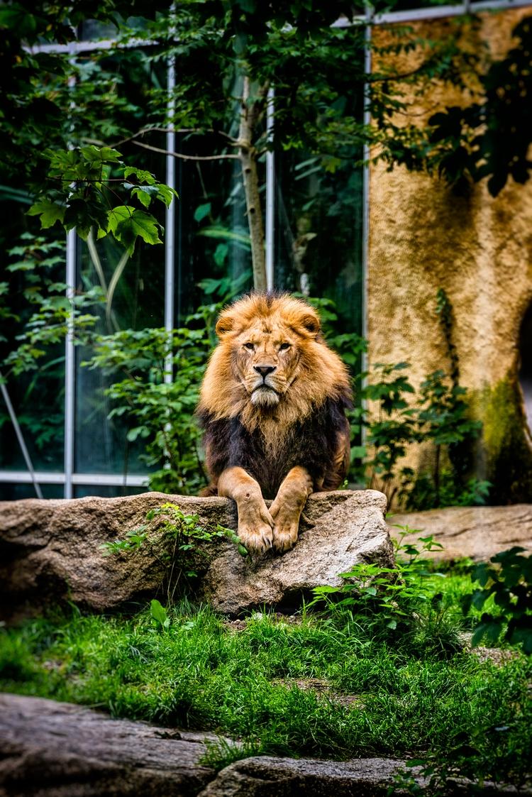 argue home - lion, Munich - christofkessemeier   ello