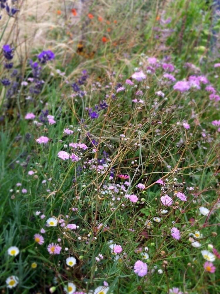 stroll garden today inspiration - empyreane | ello
