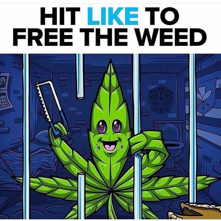 Free WEED - cannabis - cropkingseeds | ello