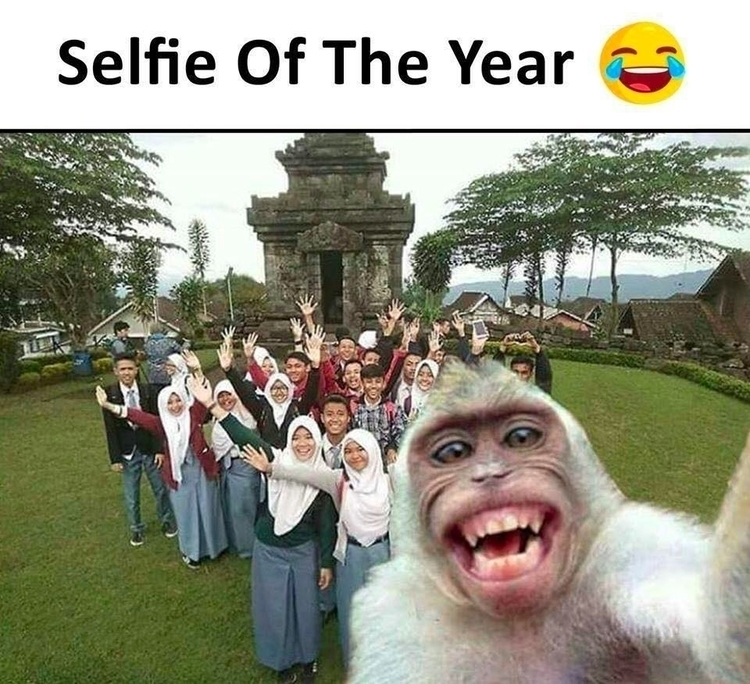 Happy Monkey - act. Reposted Sa - ccruzme | ello