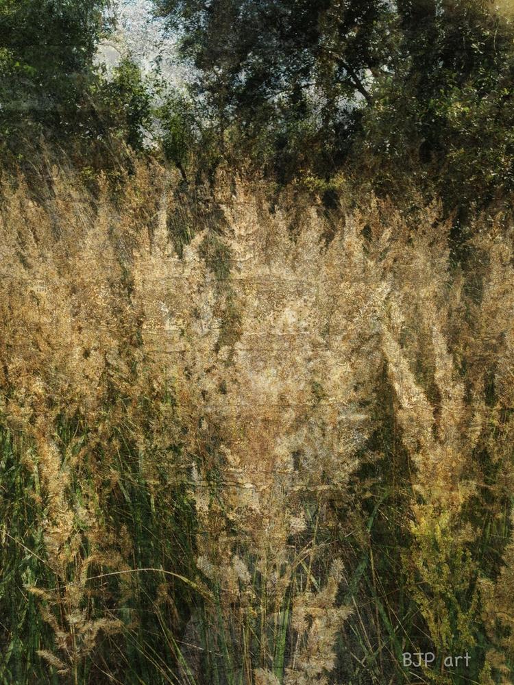 Gräser 3  - BJP_art, Lichtspurkomposition - bringfried | ello