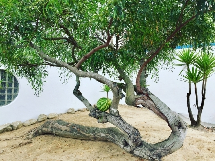 tree#watermelon#camping#summer - runjiang | ello