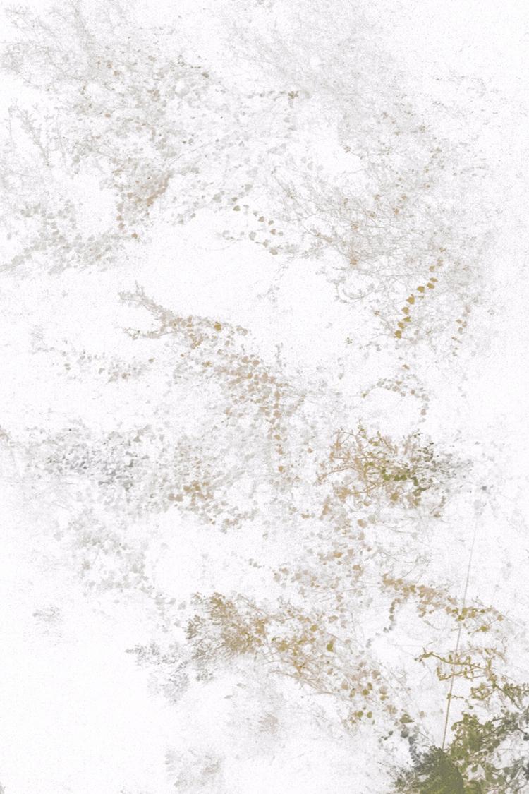 fractals foliage Fractals flowi - ishan_upadhyay | ello
