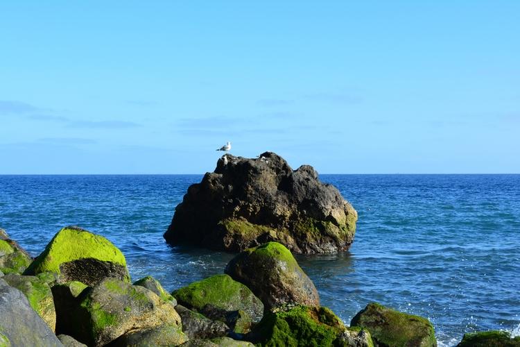 Seagulls Madeira - euric | ello