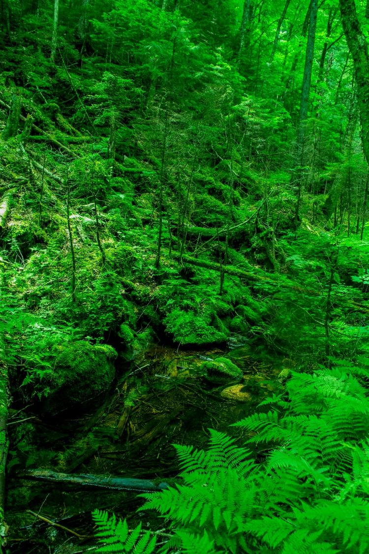 Forest Green Photography - Digital - mowmowchevsky | ello