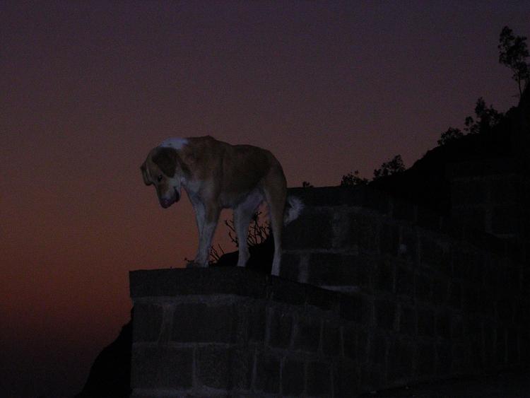 Dog Dusk Photographer—Indraji - indrajitdutta | ello