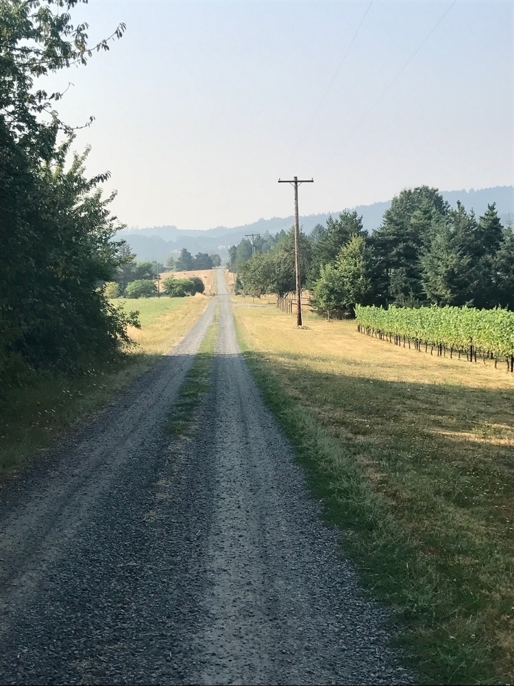 Long gravel wine country - philip_higgins | ello